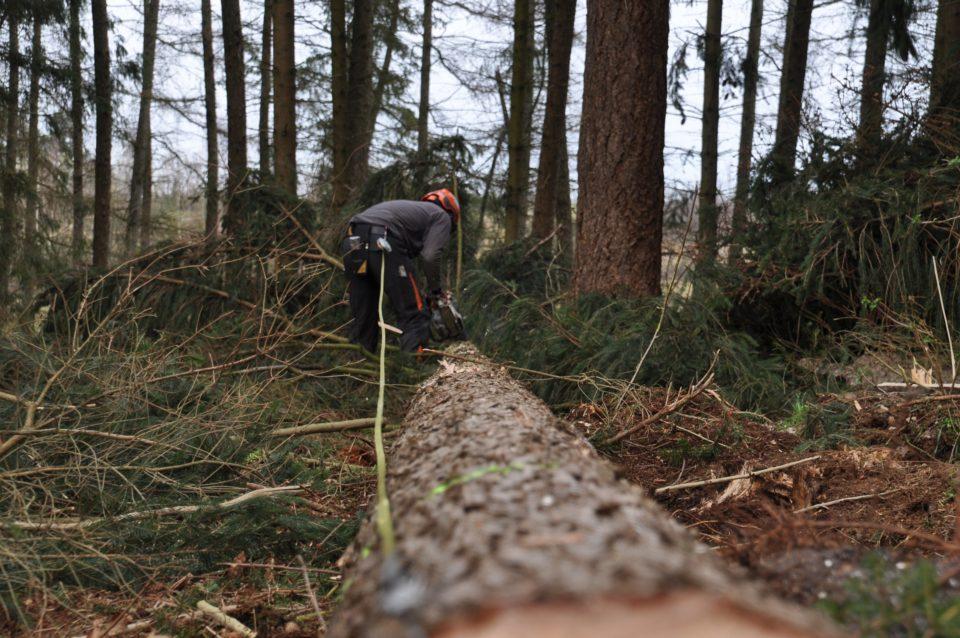 Metsuri, metsätyö