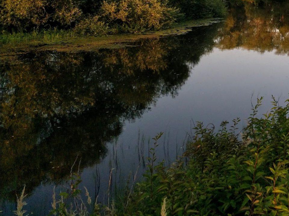 Punkalaitumenjoki