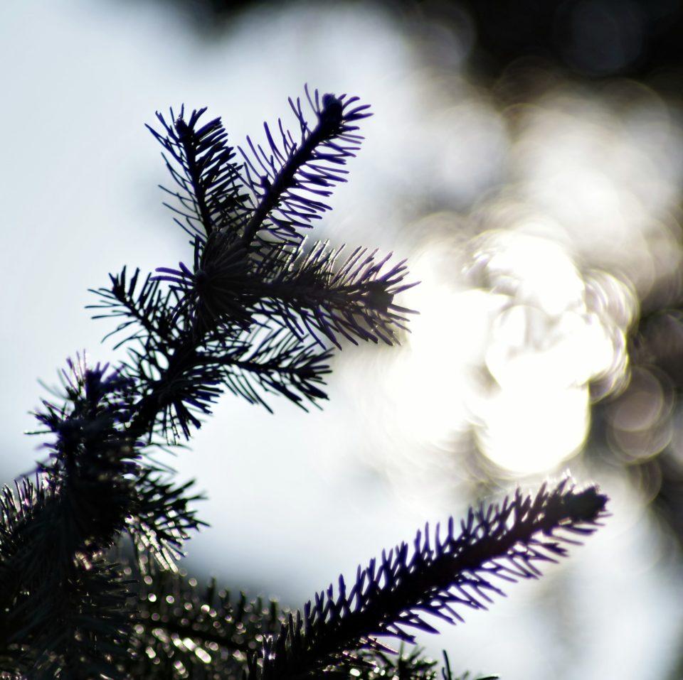 Joulukuusi, valo