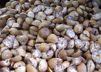 Muskottipähkinä