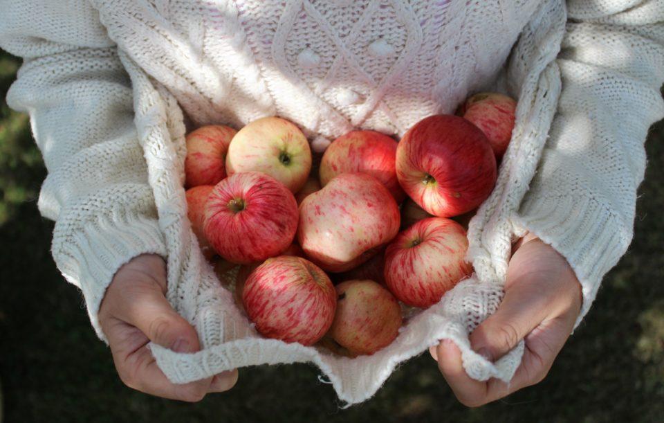 Omenoita, omena