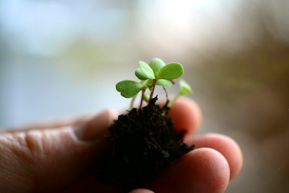 Kasvi, maaperä, maa