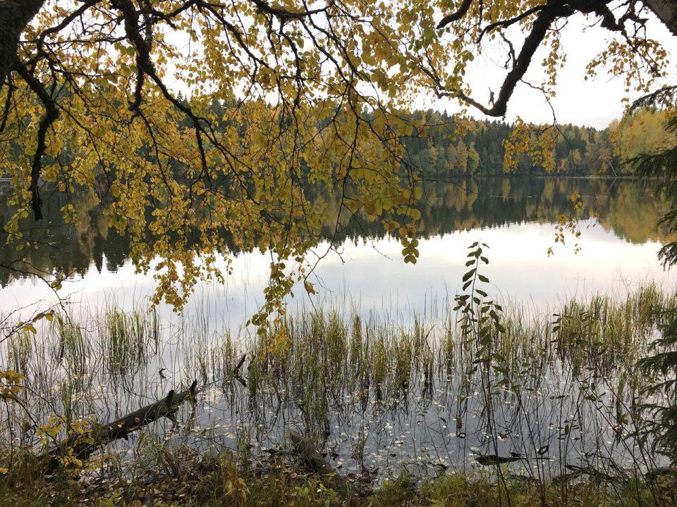 Järvi, ranta, syksy
